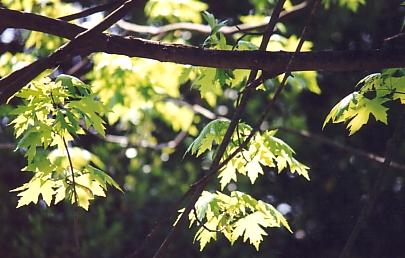 brighttree.jpg