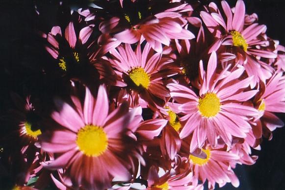 pinkflowers2.jpg